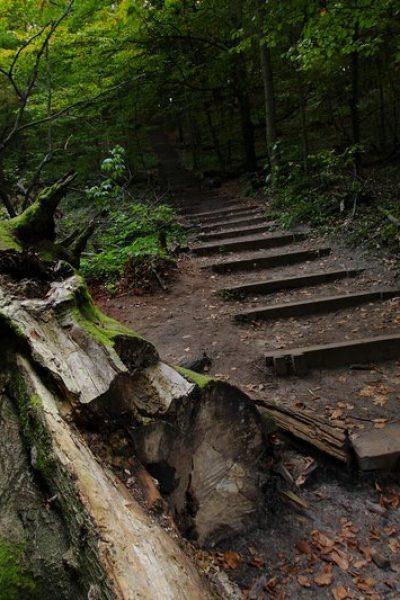 Szlak na Bukową Górę